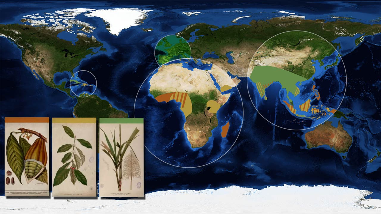 European Colonial Empires grew export plants in their colonies